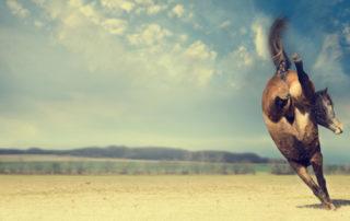 horse kicking up heels
