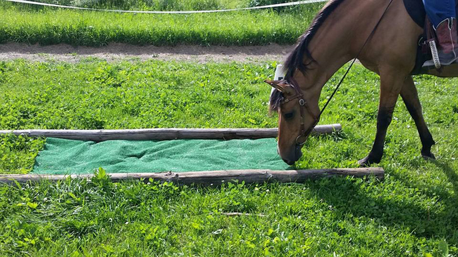 patience to overcome adrenaline in horses